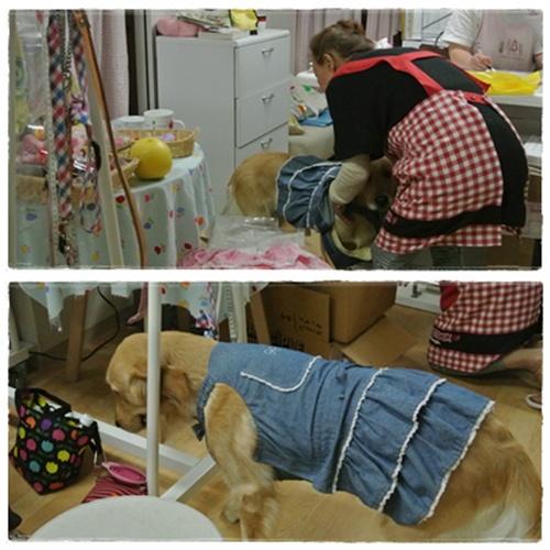 cats5_20120624191559.jpg