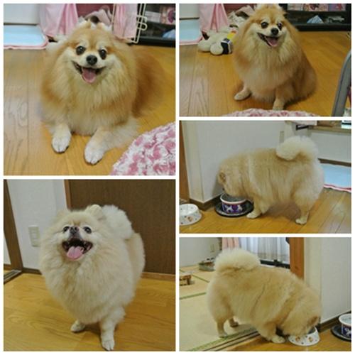 cats8_20120603151455.jpg
