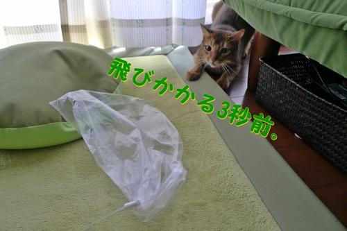 1,2,3・・・・ゴー!