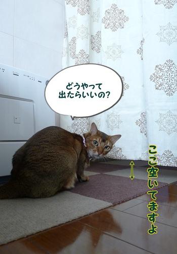 えぇ~!?出れるよー!