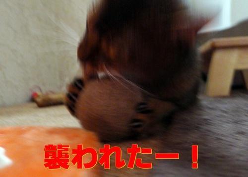 ぎゃー!肉食獣!!