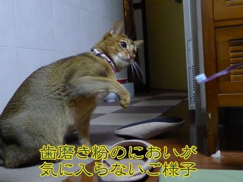 猫パンチ炸裂!