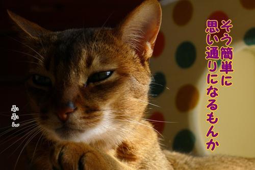 ・・いじわるー