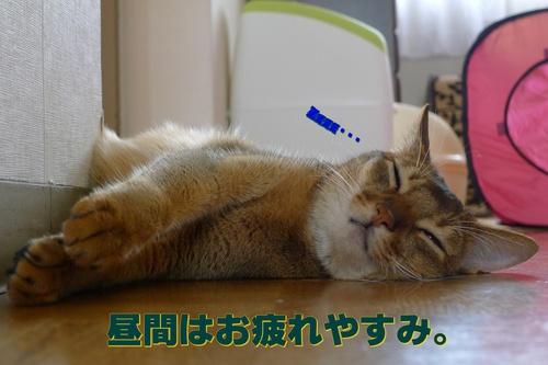 こんな可愛い寝顔なのに、夜は・・・