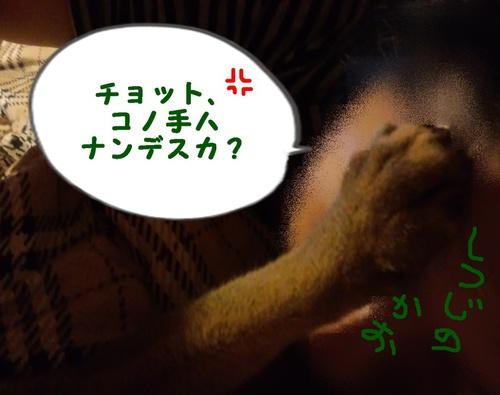 相撲の夢見てるの?
