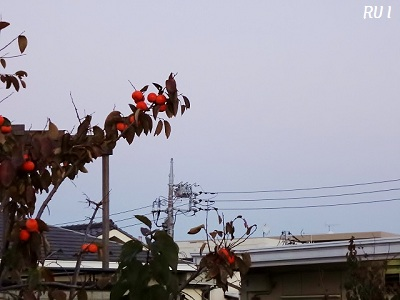 2012.11.24 002
