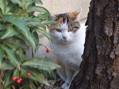 猫 008 (2)
