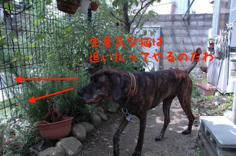 DSC_0019_convert_20120829222145.jpg