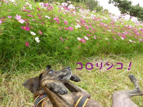 P1090070_convert_20121030164209.jpg
