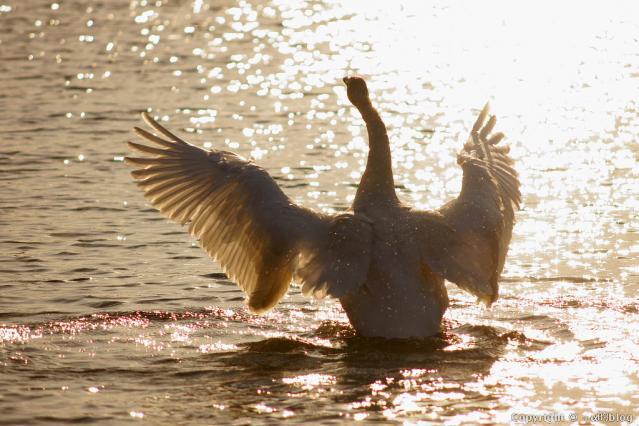 swan1204aa_eip.jpg