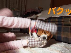 P1238480.jpg