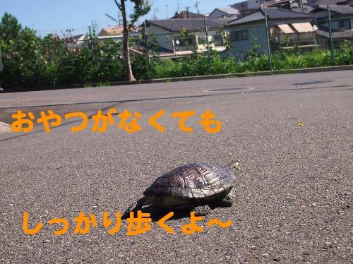 P9287461.jpg