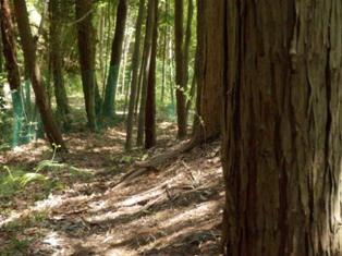 林間コースのドッグラン