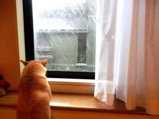 雨だぁ~~