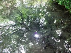 水面に映った景色