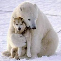 a_baa-Bear-and-wolf.jpg