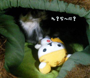 NEC_0001_20121113103919.jpg
