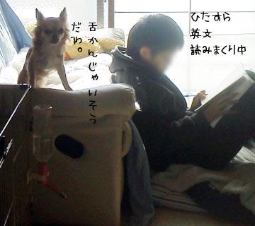 NEC_0001_20130302104221.jpg