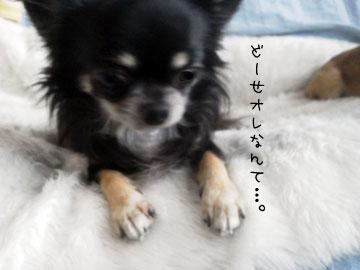 NEC_0007_20121114145143.jpg