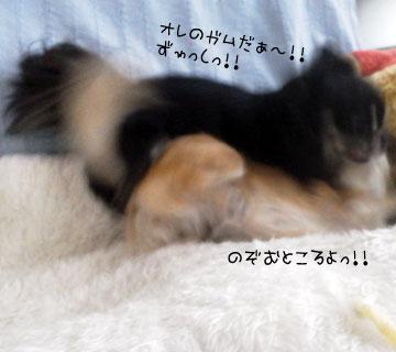 NEC_0008_20121114145143.jpg