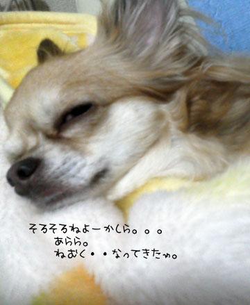 NEC_0009_20121113103919.jpg