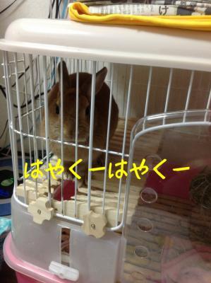image_20130122065419.jpg