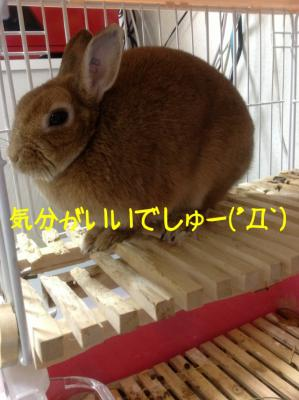 image_20130122065420.jpg