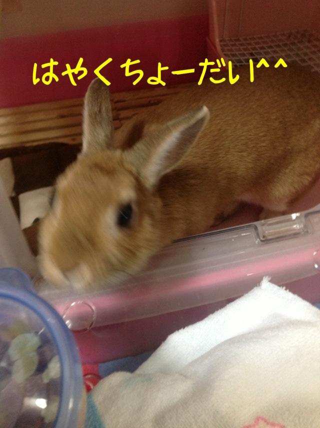 image_20130125073955.jpg