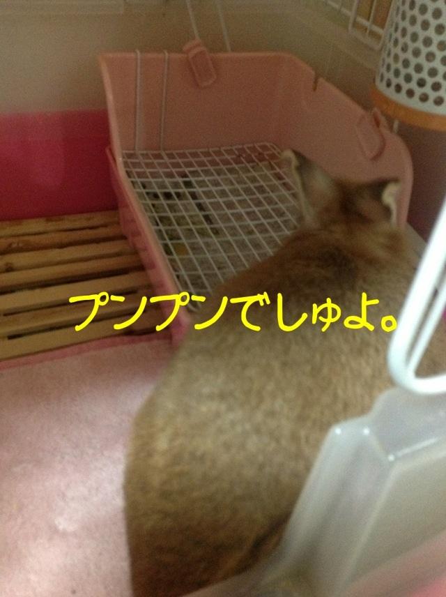 image_20130125073956.jpg