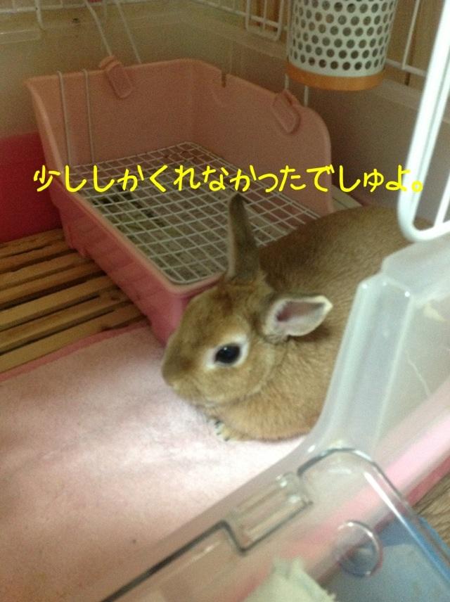 image_20130125074013.jpg
