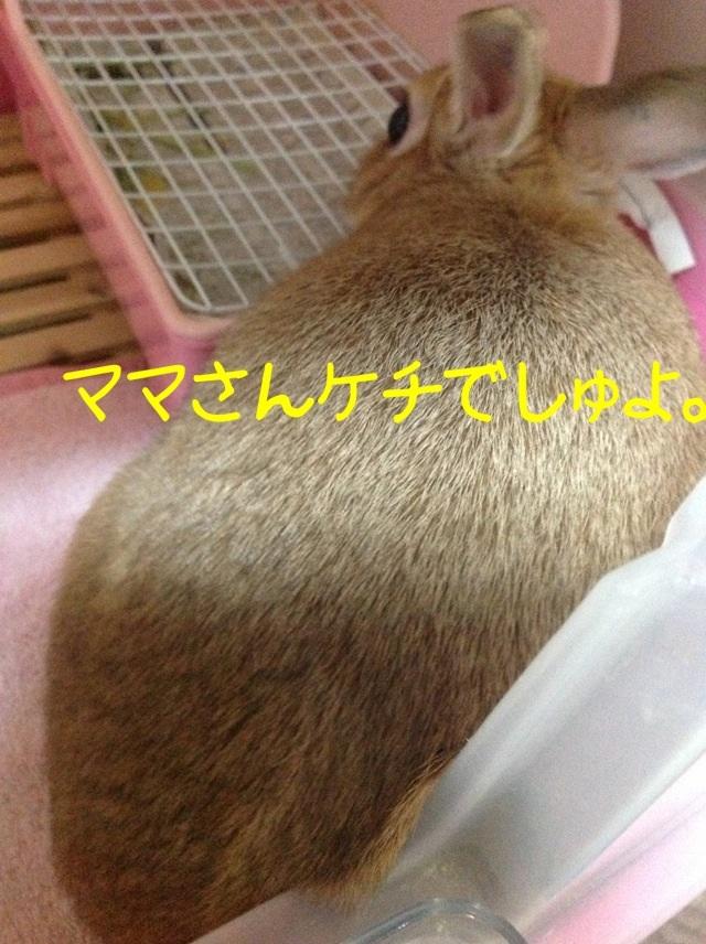 image_20130125074032.jpg