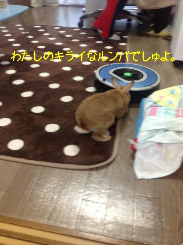 image_20130126105526.jpg