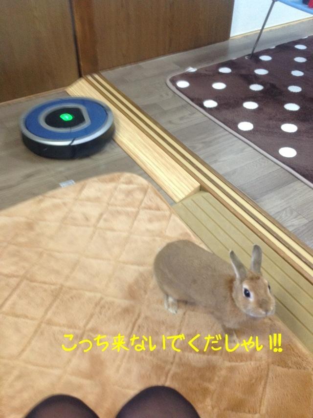 image_20130126105735.jpg