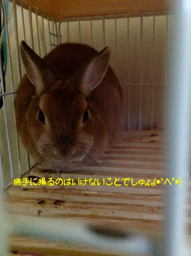 image_20130130062638.jpg