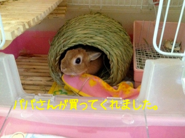 image_20130130062740.jpg
