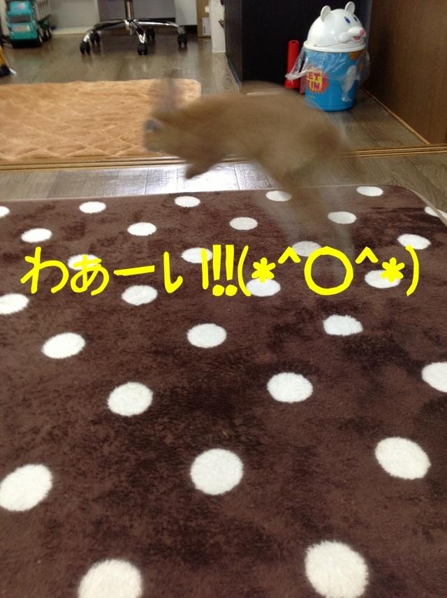 image_20130202113045.jpg