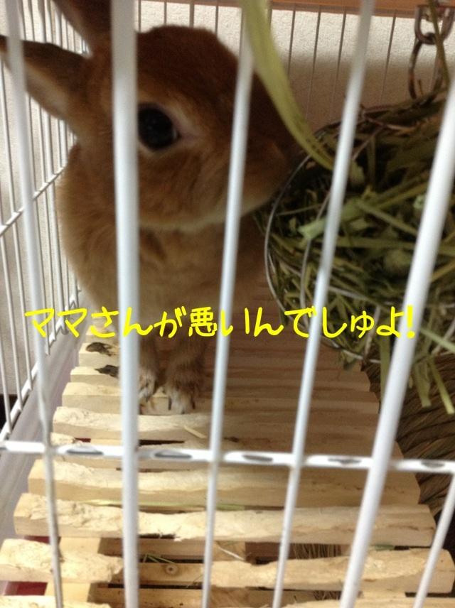 image_20130206083702.jpg