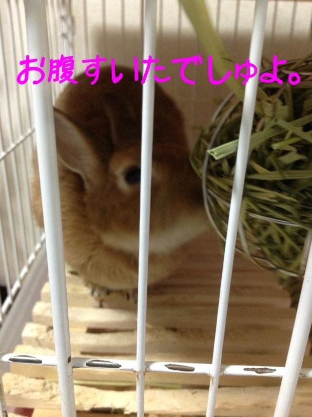 image_20130206083703.jpg