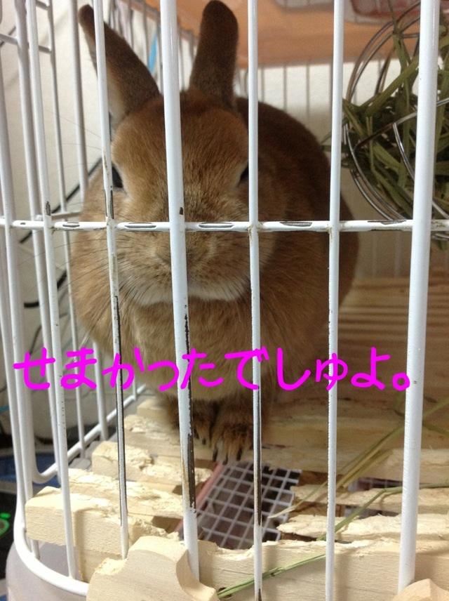 image_20130208141359.jpg