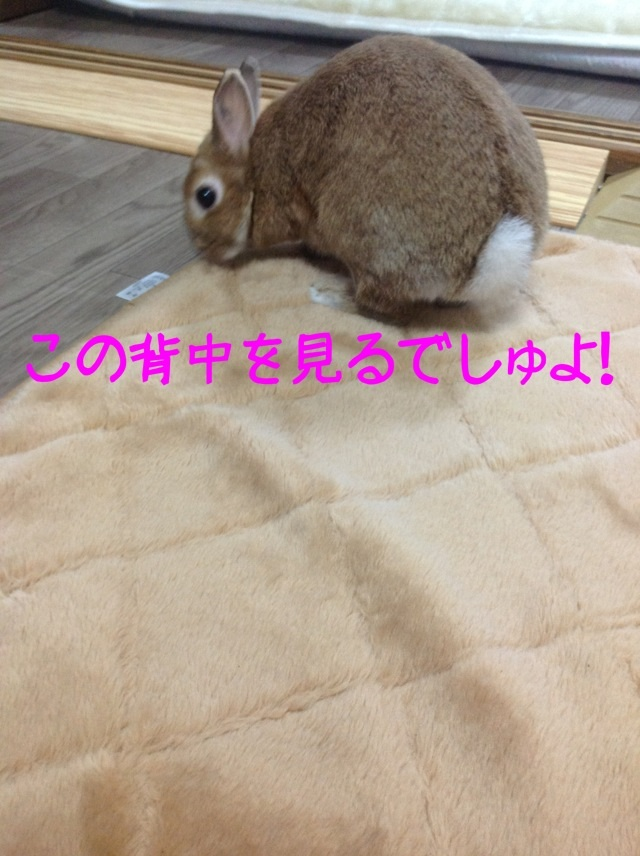 image_20130208141429.jpg