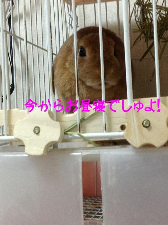 image_20130215111424.jpg