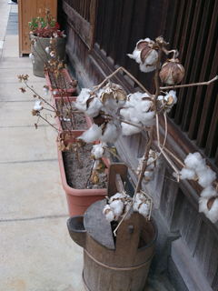 木綿街道の木綿