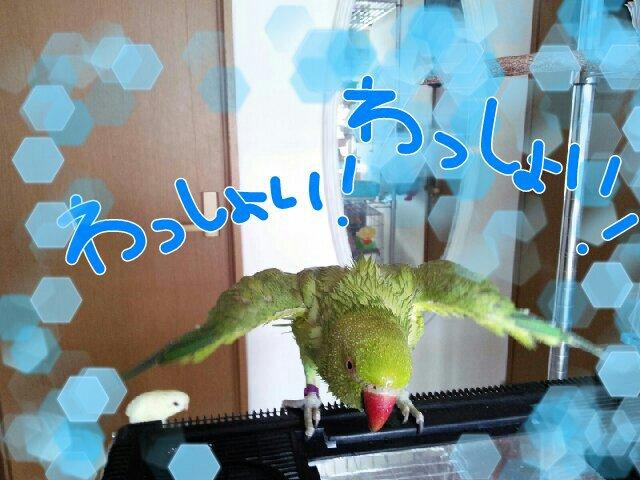 PicsPlay_1391562577819.jpg
