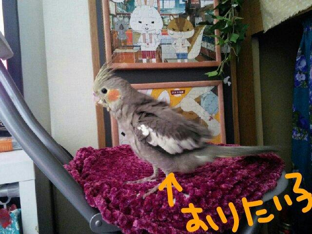 PicsPlay_1391911375753.jpg