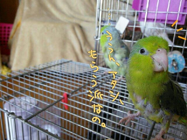 PicsPlay_1392348057568.jpg