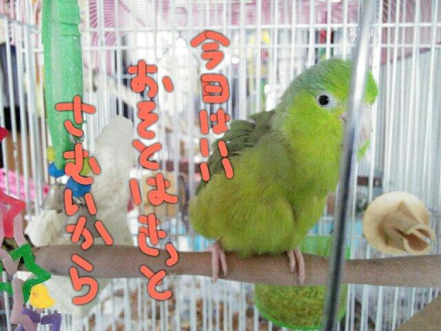 PicsPlay_1392681094124.jpg