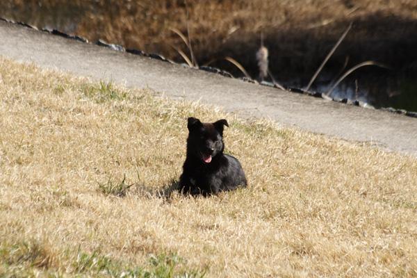 犬の視力と聴力はすごいですね ...
