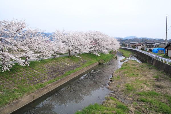 ... ブログ 「ポタフォト@Osaka : 奈良自転車道 ブログ : 自転車道