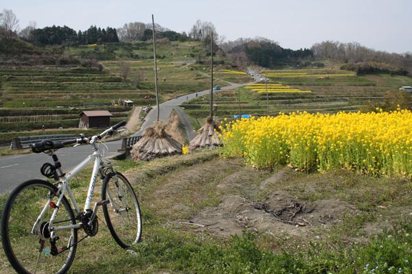自転車道 奈良自転車道 ブログ : 稲渕の棚田は菜の花がきれいで ...