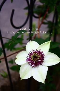 5251_20120525122749.jpg